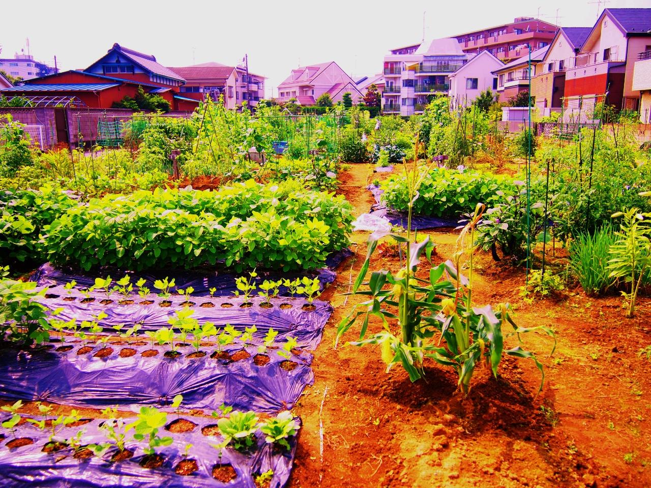 P7011124 (1280x960)松戸の好きな風景